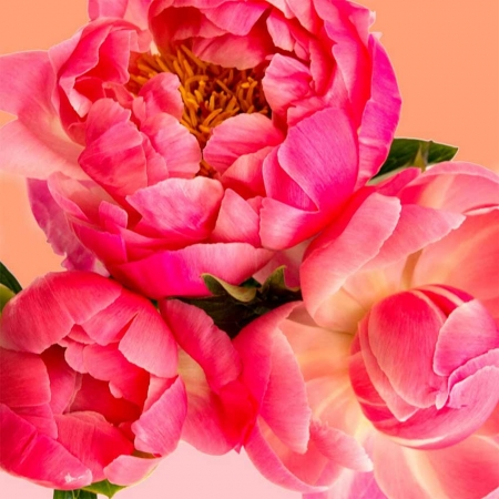 Pink Picasso Paint Kit: Petal Power